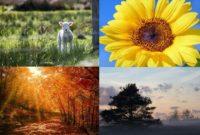 seizoenencyclus